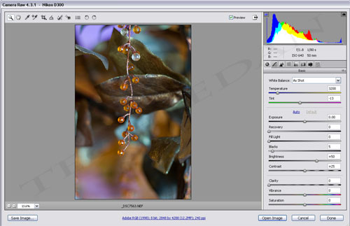 Adobe Camera Raw 4.3.1 Plugin